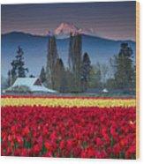 Skagit Valley Tulips-mt. Baker Wood Print