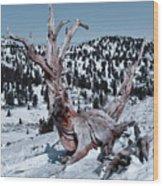 Skating Pine Wood Print