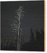 Skeletal Tree Starscape Wood Print