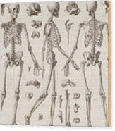 Skeletons Wood Print