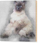 Sketch Of Regal Himalayan Cat - Not Wood Print