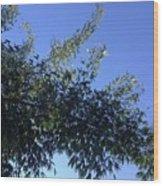 Skies Grass  Wood Print
