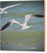 Skimmers In Flight Wood Print