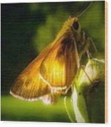 Skipper Butterfly Basking In Sun Wood Print