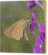 Skipper Butterly Sipping Nectar Wood Print