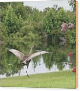 Skipping Sandhill Crane By Pond Wood Print