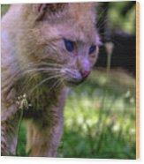 Skippy Feral Cat Portrait 0369b Wood Print