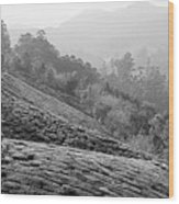 Skn 6521 Nature's Bounty B/w Wood Print