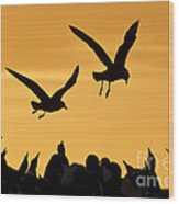 Skuas And Penguins Wood Print
