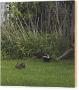 Skunk And Rabbit Surprise Wood Print