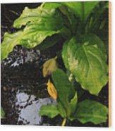 Skunk Cabbage Beauty Wood Print