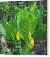 Skunk Cabbage In Bloom Wood Print