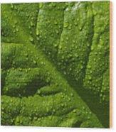 Skunk Cabbage Leaf Wood Print