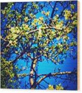 Sky Bloom Wood Print