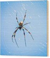 Sky Blue Web Wood Print