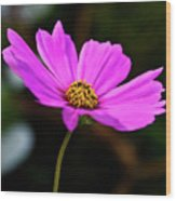 Sky Facing Flower Wood Print