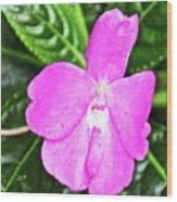 Sky Flower In Huntington Botanical Gardens In San Marino-california  Wood Print