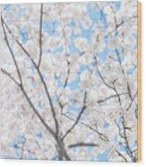 Sky Full Of Blossoms Wood Print