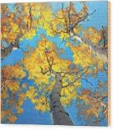Sky High Aspen Trees Wood Print