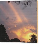 Sky King Wood Print