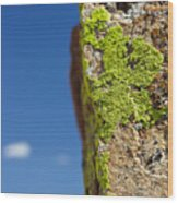 Sky Lichen Wood Print