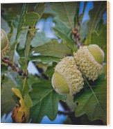 Sky Lit Oak Acorns Wood Print