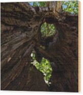 Sky View Through A Hollow Tree Trunk Wood Print