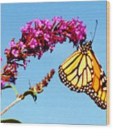 Skylands Monarch Wood Print