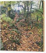 Skylands Path P Wood Print