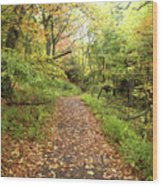 Skyline Trail P Wood Print
