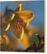 Skylit Lily Wood Print