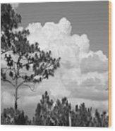 Slash Pine Forest Wood Print by Steven Scott