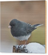 Slate Junco Feeding In Snow Wood Print