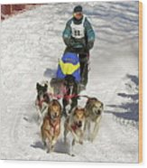 Sled Dogs In Action Wood Print