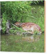 Sleep Fawn White Tailed Deer Wood Print