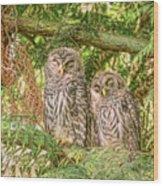 Sleeping Barred Owlets Wood Print