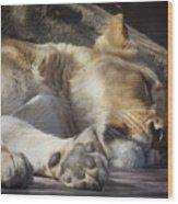Sleeping Beauty,  Houston Zoo Wood Print
