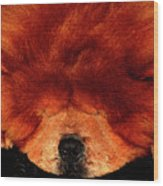 Sleeping Chow Chow Wood Print