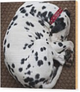 Sleeping Dalmatian Wood Print