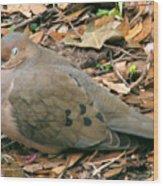 Sleeping Dove Wood Print