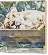 Sleeping Kittykat Wood Print