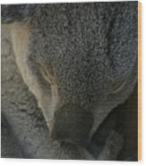 Sleeping Koala Bear Wood Print
