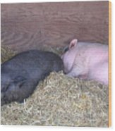 Sleeping Pigs In The Hay Wood Print