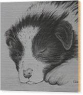 Sleeping Puppy Wood Print