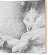 Sleeping Sadie Wood Print