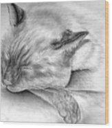 Sleeping Siamese Wood Print