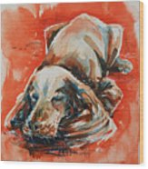 Sleeping Spaniel On The Red Carpet Wood Print