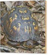 Sleeping Turtle Wood Print