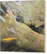 Sleeping Under The Water Wood Print