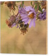 Sleepy Bee On New England Aster Vertical Wood Print